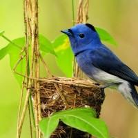 听见鸟叫的声音